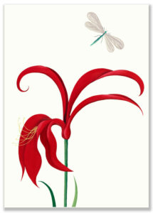 sarah-wilkins-red-orchid