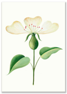 sarah-wilkins-une-fleur